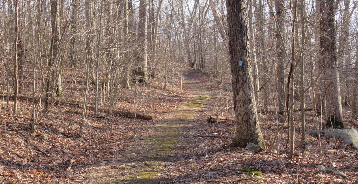 Manor Trail in Ringwood State Park. Photo by Daniel Chazin.